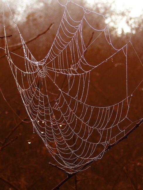 tela de araña decorativa