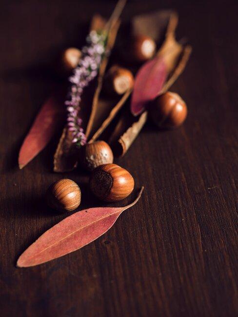 hojas secas rojas y castanas