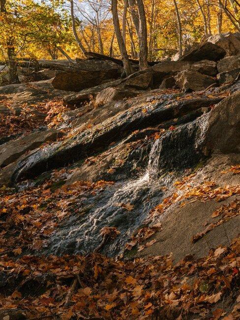 piedras en bosque en otono