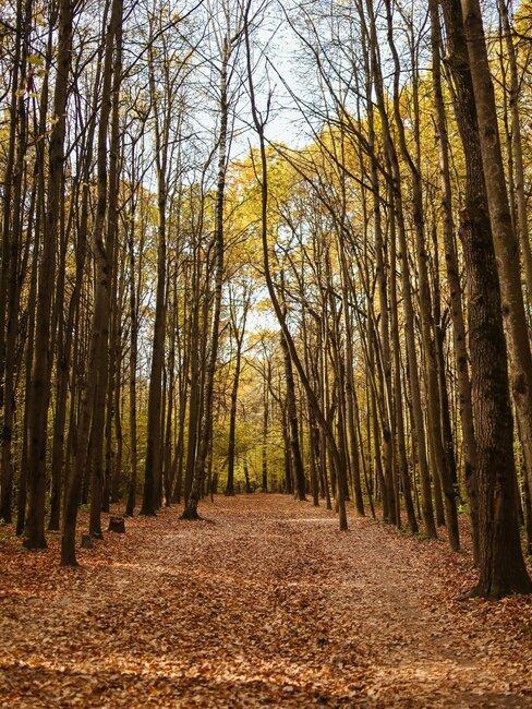 bosque en otono