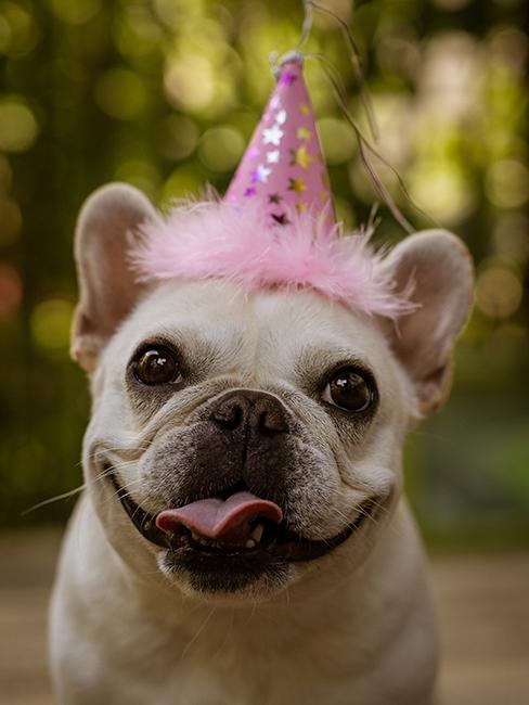 Chien avec chapeau d'anniversaire