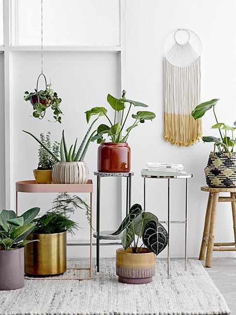 cache-pots avec plantes et suspension en macramé