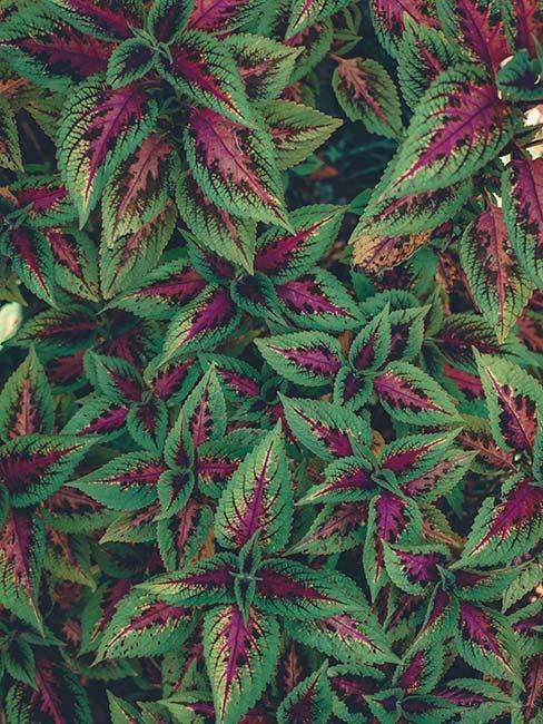 plante verte et rose