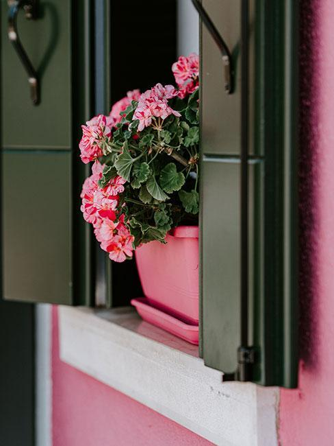 jardinière rose posée sur le rebord de la fenetre avec fleurs roses