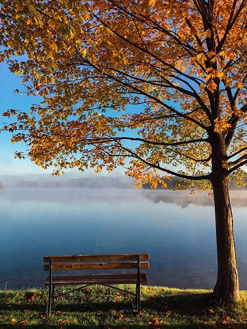 banc avec arbre au bord d'un lac