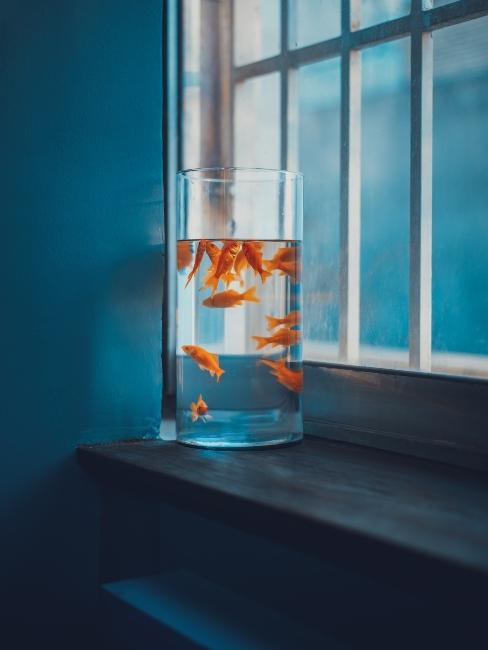Poissons rouges dans aquarium vase en verre
