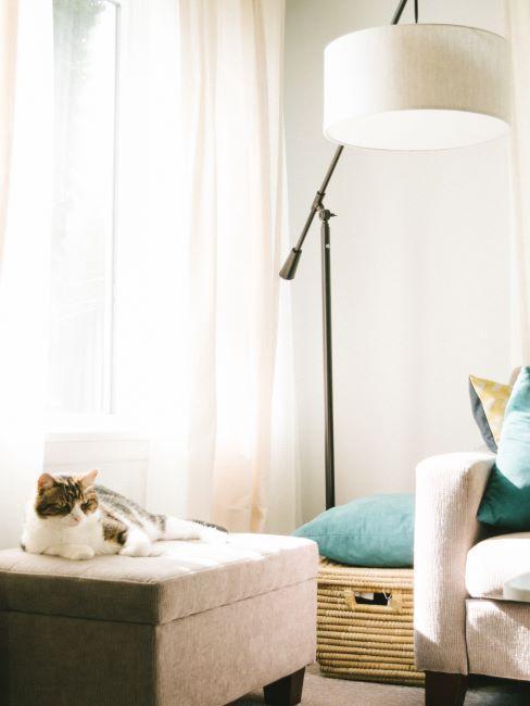 chat sur un pouf, lampadaire, rideaux