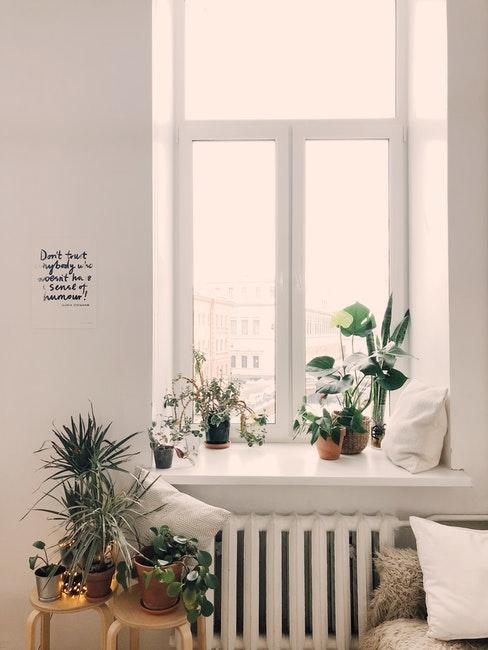 déco avec des plantes