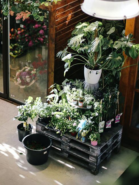 déco de jardin de récup avec palettes et plantes