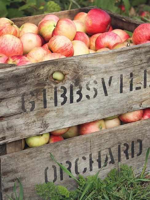 déco de jardin avec des pommes et une caisse en boite