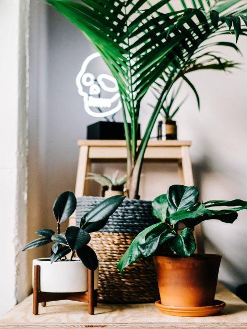 décoration avec plantes vertes