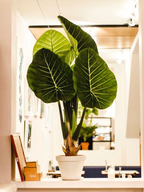 Gros plan d'une plante verte dans un pot