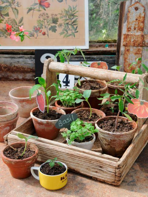 Potager DIY avec différentes herbes
