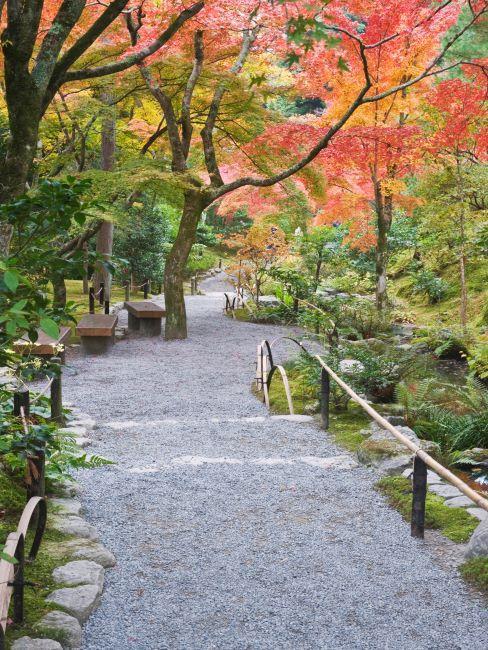 chemin extérieur avec arbres plantés autour