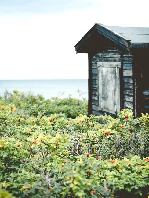 Abri de jardin en bois à la mer