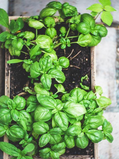 plante verte dans un pot