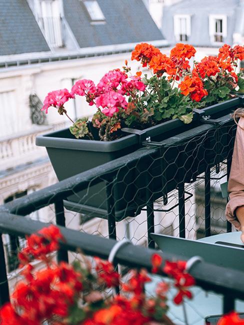 jardinière avec fleurs roses et rouges sur un balcon fleuri