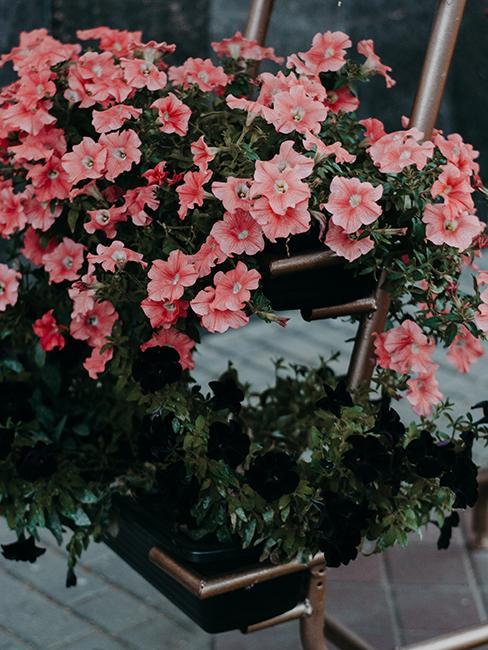 jardinière avec fleurs roses