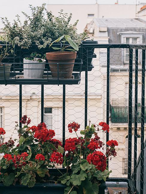 jardinières avec fleurs rouges accrochées sur la rambarde