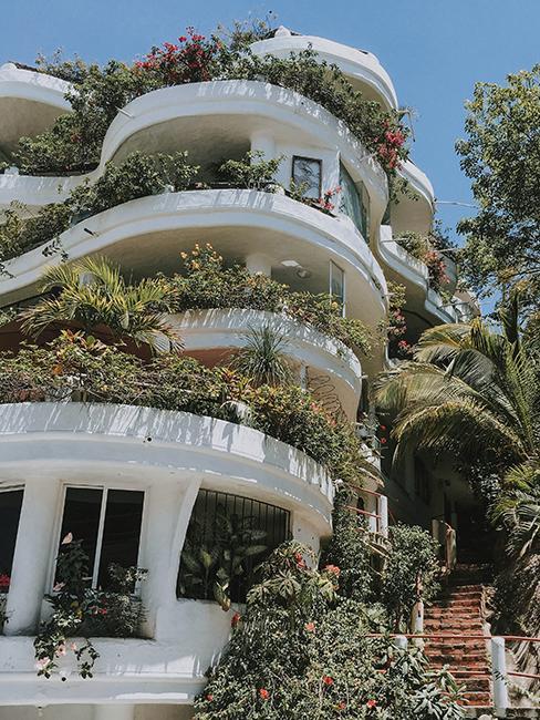 balcon avec pleins de plantes