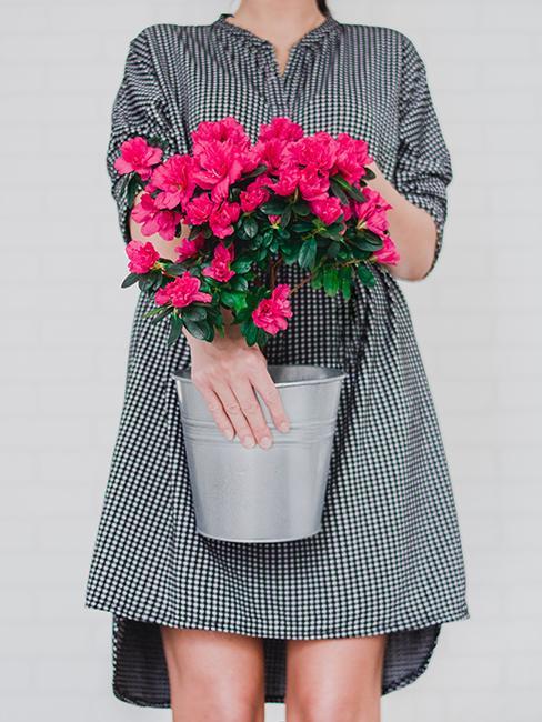 azalées roses dans un pot en fer