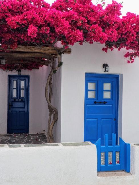 facade blanche avec porte bleue et arbre a fleurs roses