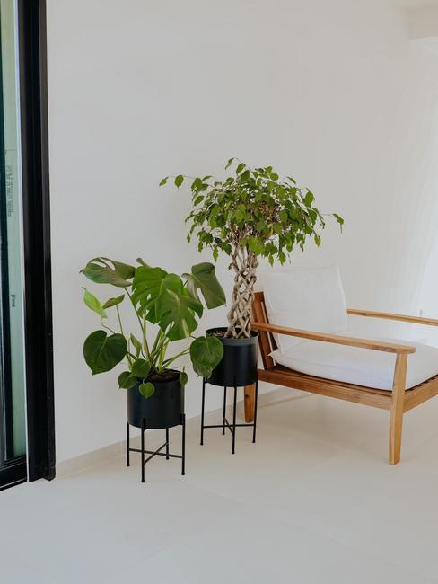 Plantes dans des pots noirs posés au sol à coté d'un fauteuil blanc et boic