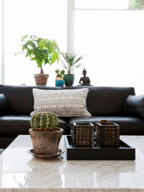 Cactus en pot sur table basse en marbre devant un canape fonce avec coussin a motifs