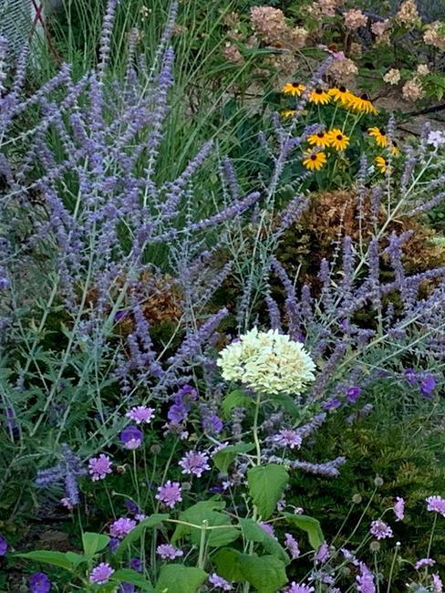 massif florale avec lavande