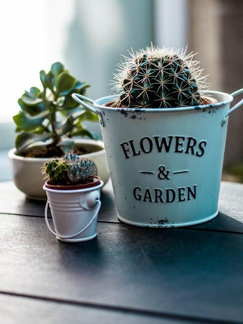trois plantes succulentes differentes dans des cache-pots vintage distincts