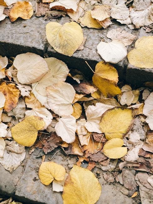 feuilles jaunes tombées sur les pavés en automne