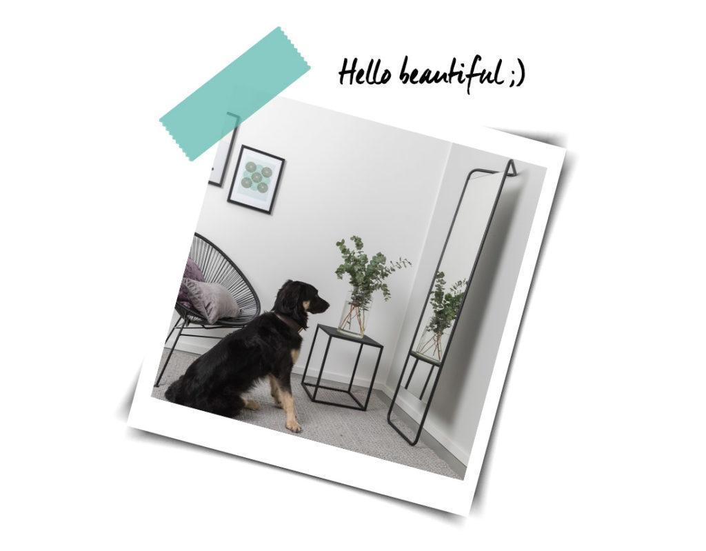 chien se regardant dans un grand miroir posé au sol