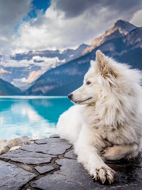 chien au bord d'un lac