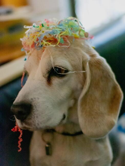 Chien qui a des confettis sur la tête, ambiance de fête