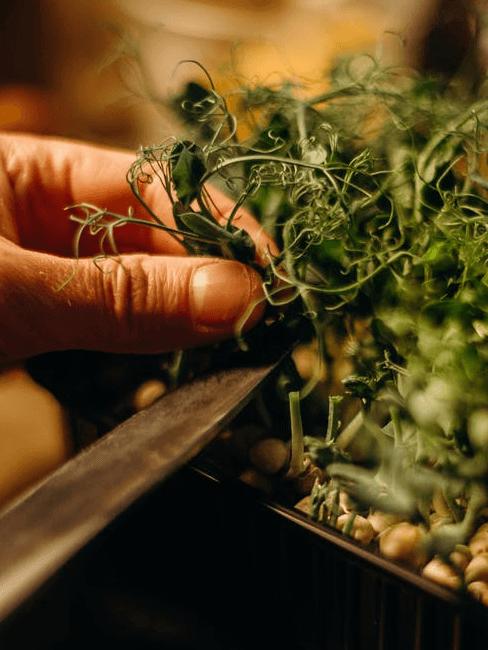 Herbes aromatiques maison