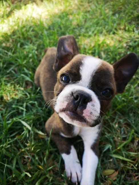 petit chien, protéction d'animaux