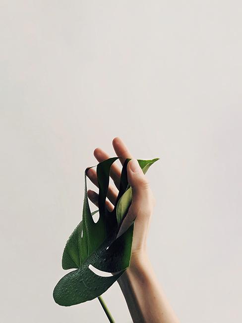 Plante touchée par une main