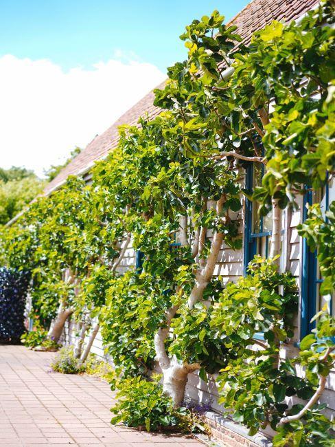mur des plantes, jardin extérieur
