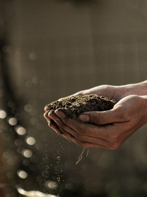 terre pour plantes