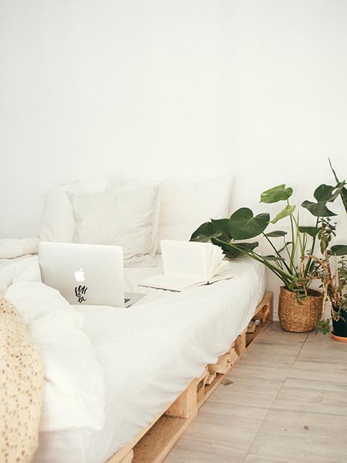 chambre blanche avec lit en palette et plante