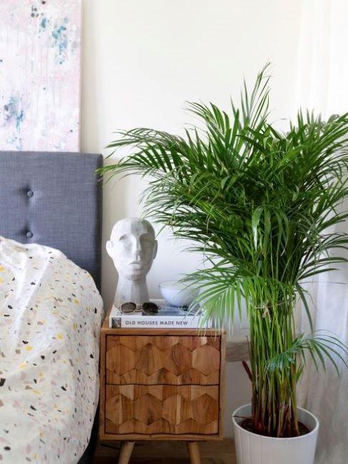 plantes d'intérieur, chambre à coucher tendance