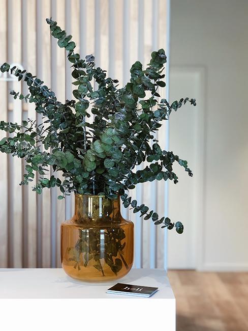 plante dans vase