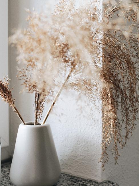 vase avec fleurs de la pampa sur un rebord de fenetre