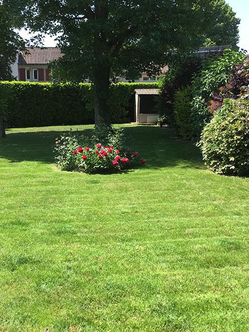 pelouse jardin
