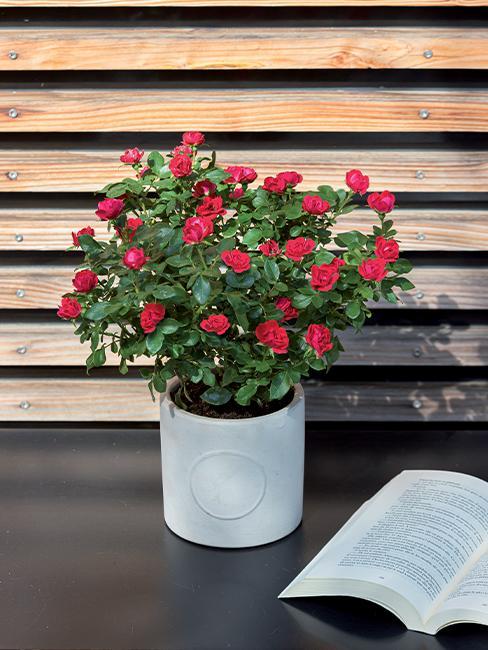 rosier-zepeti-livre