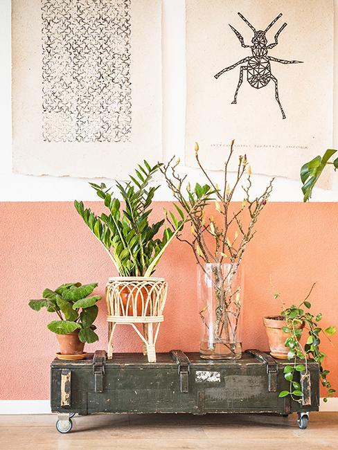 mur bicolore rose et blanc et plante