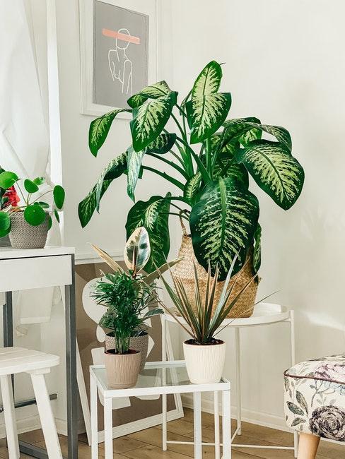 plante verte, nature, niksen, calme