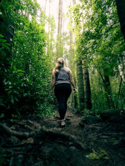 Shinrin Yoku, forêt, bien etre, sylvotherapie