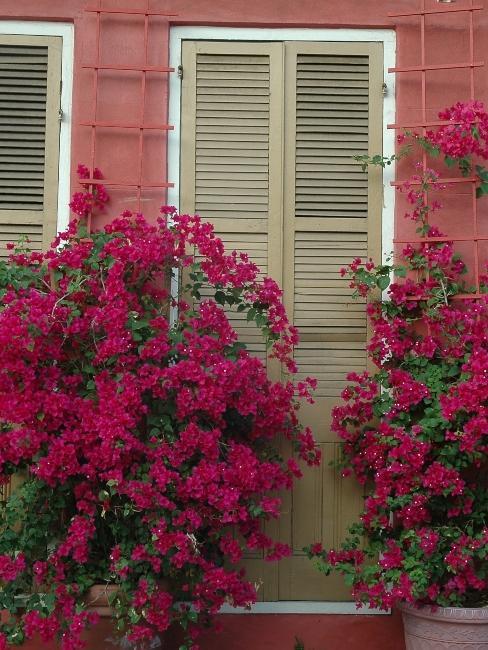 mur rose extérieur