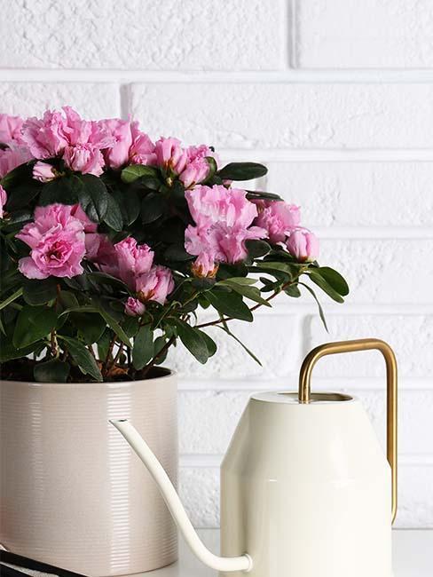 azalea-florajet-bouquet-arrosoir